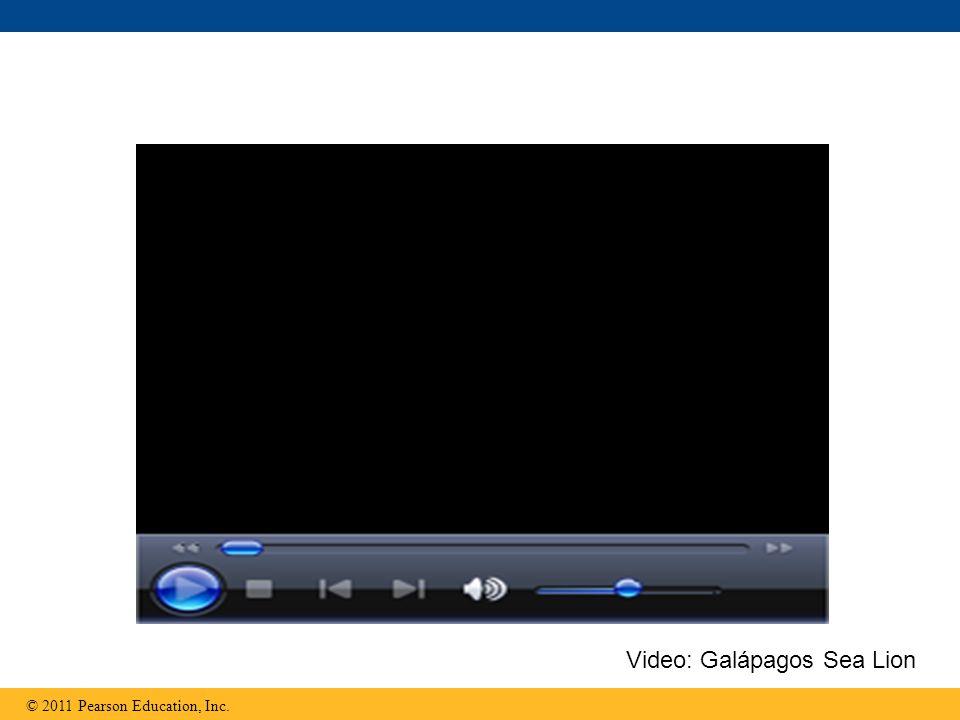 © 2011 Pearson Education, Inc. Video: Galápagos Sea Lion