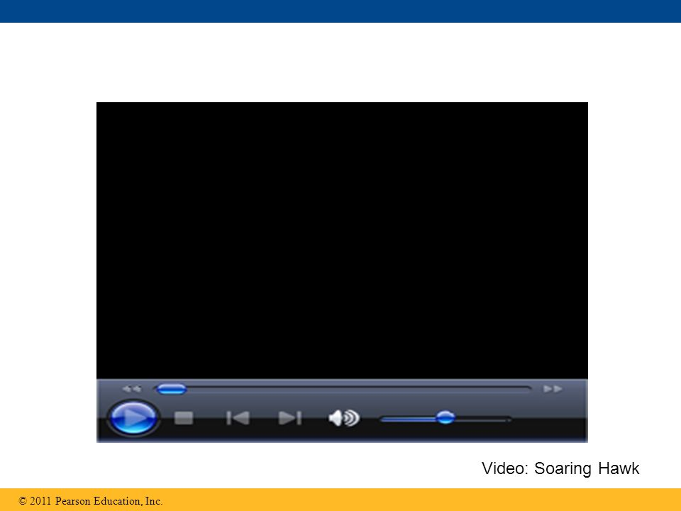 © 2011 Pearson Education, Inc. Video: Soaring Hawk