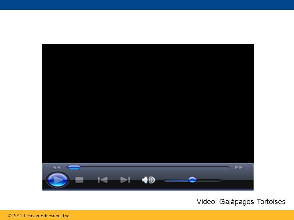 © 2011 Pearson Education, Inc. Video: Galápagos Tortoises