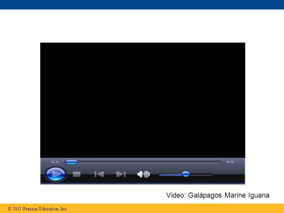 © 2011 Pearson Education, Inc. Video: Galápagos Marine Iguana