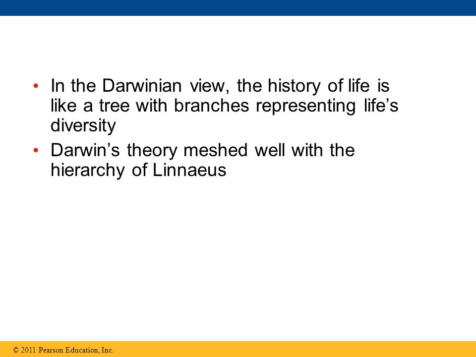 In the Darwinian view, the history of life is like a tree with branches representing life's diversity Darwin's theory meshed well with the hierarchy o