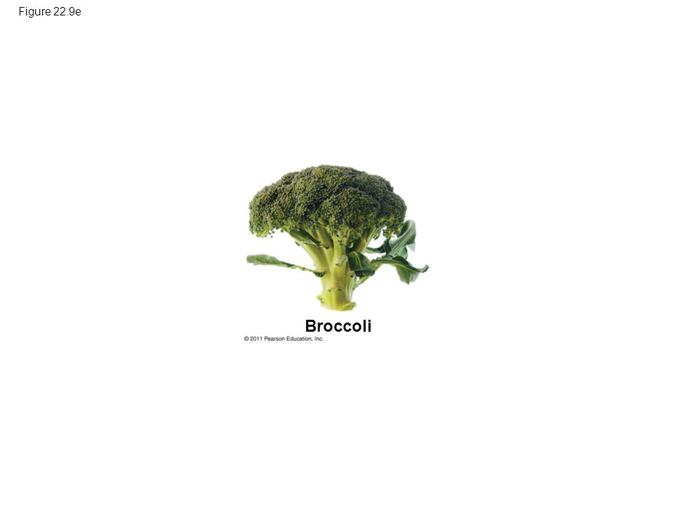 Figure 22.9e Broccoli