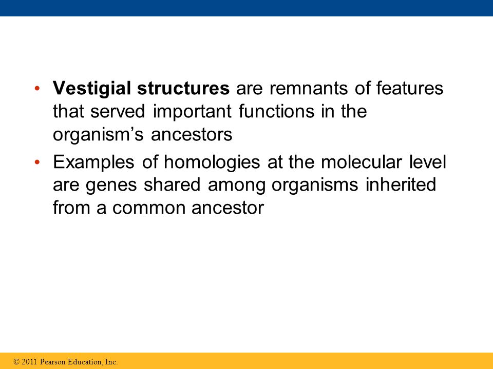 Vestigial structures are remnants of features that served important functions in the organism's ancestors Examples of homologies at the molecular leve