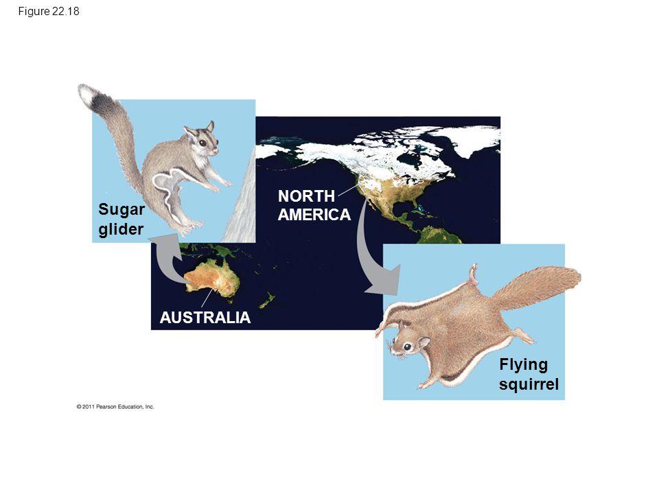Figure 22.18 Sugar glider Flying squirrel NORTH AMERICA AUSTRALIA