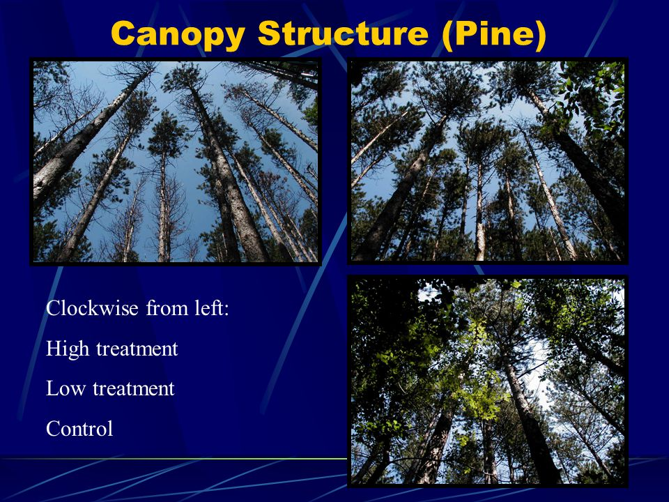 Canopy Structure (Pine) Clockwise from left: High treatment Low treatment Control