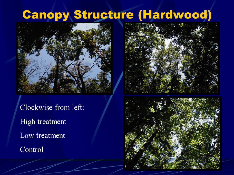 Canopy Structure (Hardwood) Clockwise from left: High treatment Low treatment Control