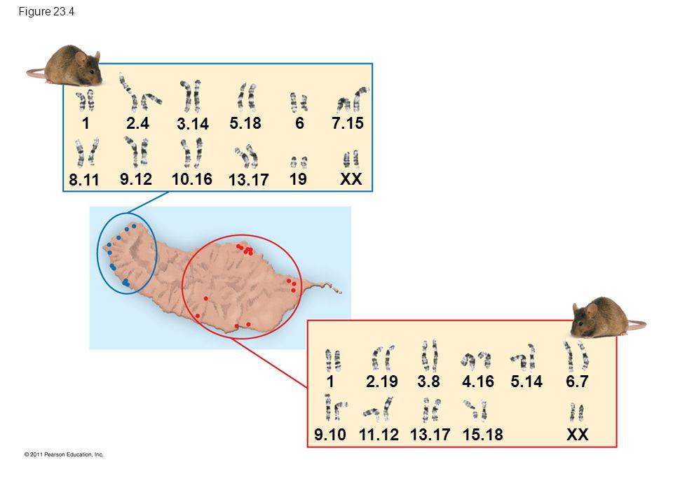 Figure 23.4 1 2.4 8.11 9.1210.16 3.14 13.17 5.18 19 6 XX 7.15 12.19 9.10 11.1213.17 3.8 15.18 4.16 5.14 XX 6.7