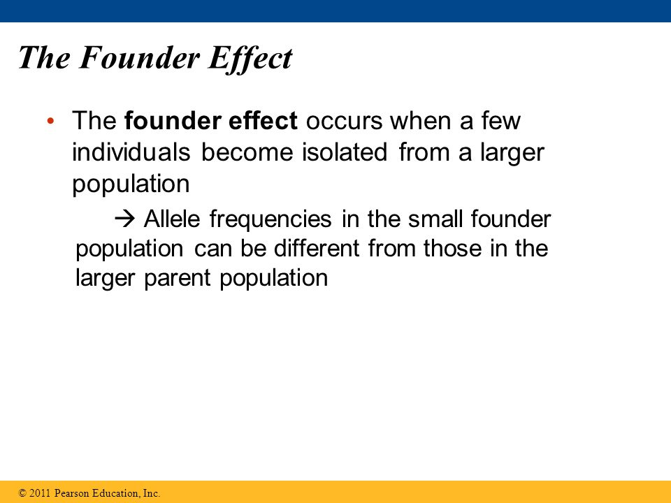 The Founder Effect The founder effect occurs when a few individuals become isolated from a larger population  Allele frequencies in the small founder population can be different from those in the larger parent population © 2011 Pearson Education, Inc.