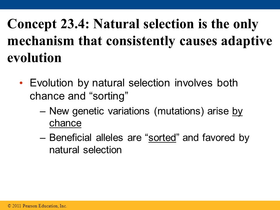 Evolution by natural selection involves both chance and sorting –New genetic variations (mutations) arise by chance –Beneficial alleles are sorted and favored by natural selection Concept 23.4: Natural selection is the only mechanism that consistently causes adaptive evolution © 2011 Pearson Education, Inc.