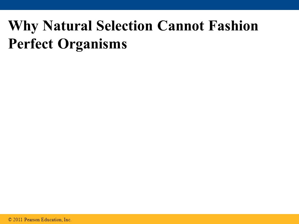 Why Natural Selection Cannot Fashion Perfect Organisms © 2011 Pearson Education, Inc.