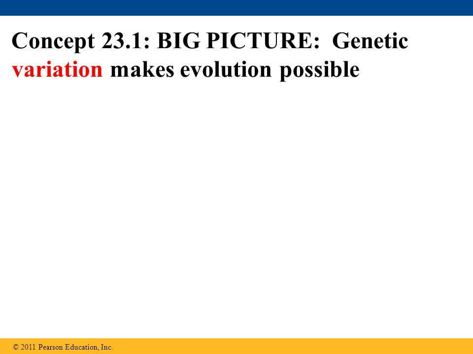 Concept 23.1: BIG PICTURE: Genetic variation makes evolution possible © 2011 Pearson Education, Inc.