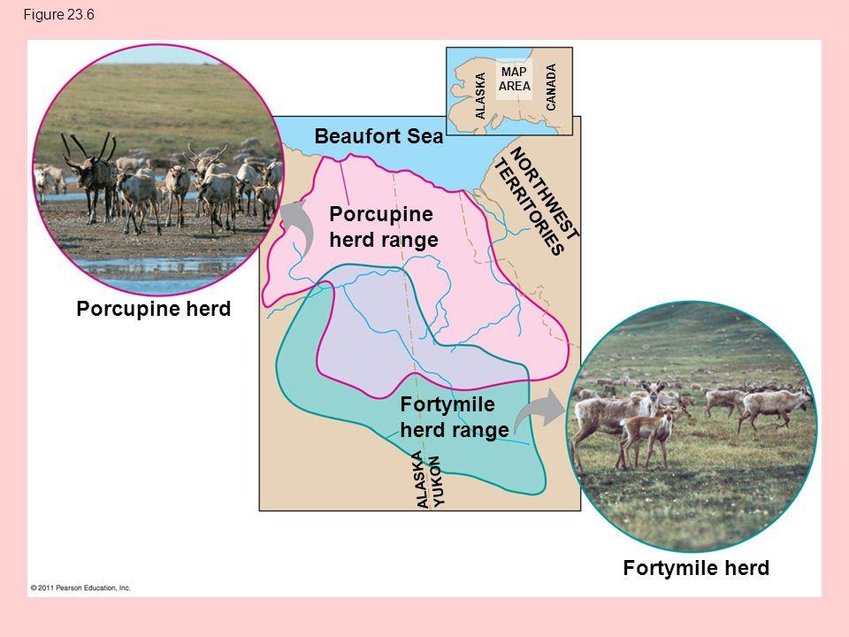 Figure 23.6 Porcupine herd Beaufort Sea Porcupine herd range Fortymile herd range Fortymile herd NORTHWEST TERRITORIES ALASKA CANADA MAP AREA ALASKA YUKON