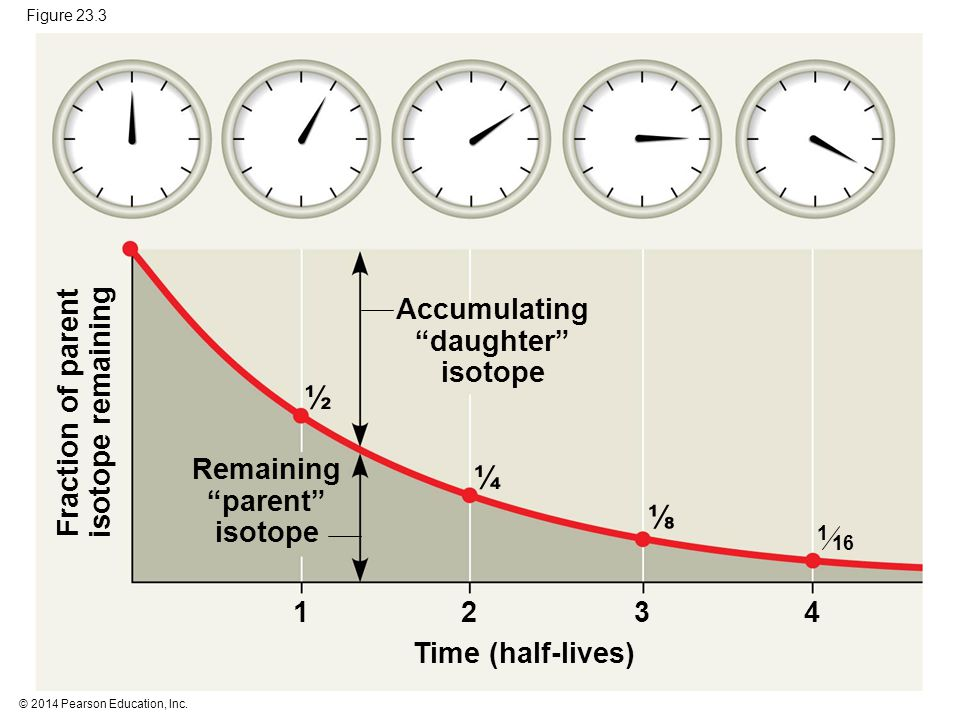 """© 2014 Pearson Education, Inc. Figure 23.3 ½ ¼ ⅛ Time (half-lives) Fraction of parent isotope remaining Remaining """"parent"""" isotope Accumulating """"daugh"""