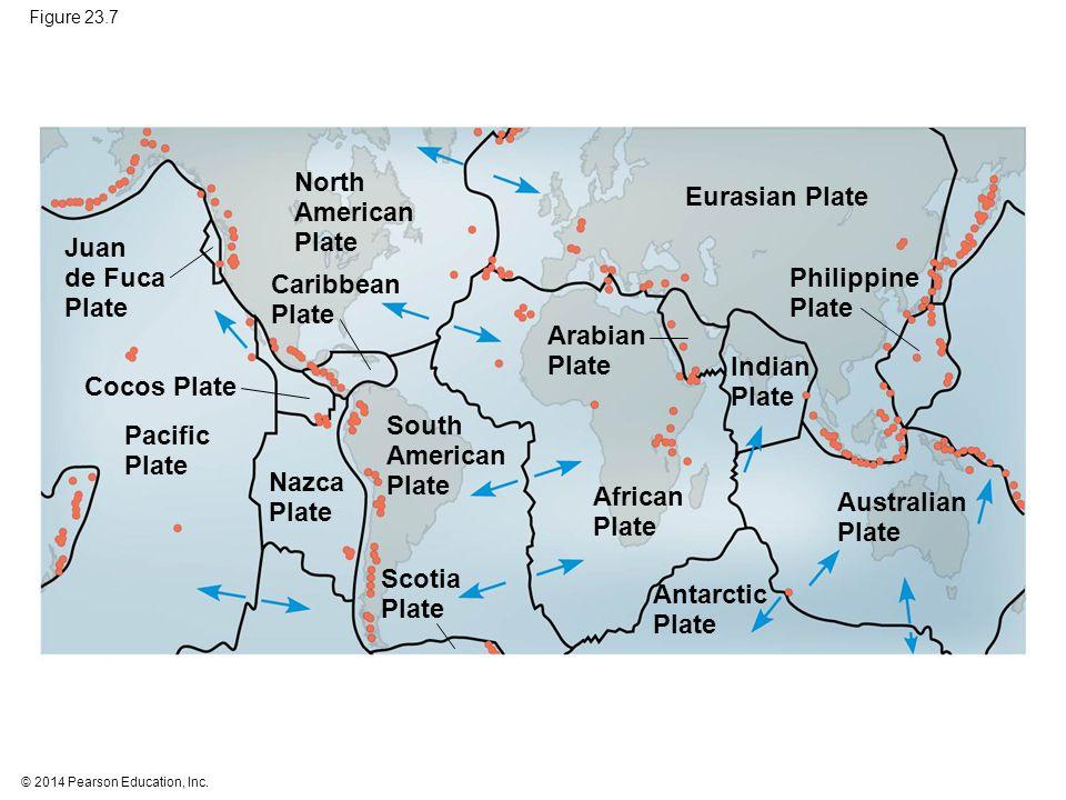 © 2014 Pearson Education, Inc. Figure 23.7 Eurasian Plate Philippine Plate Australian Plate Indian Plate Arabian Plate African Plate Antarctic Plate S
