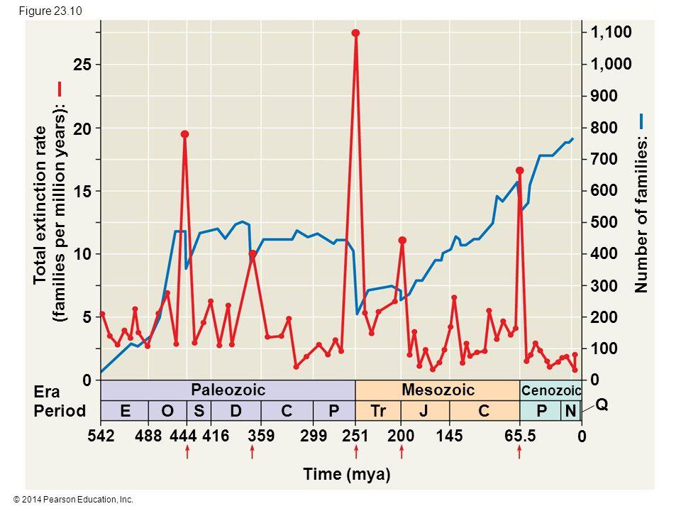© 2014 Pearson Education, Inc. Figure 23.10 Time (mya) Paleozoic Mesozoic Cenozoic 54248844441635929925120014565.5 0 EOSDCPTrJPCN Q 0 100 200 300 400