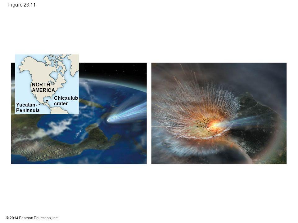 © 2014 Pearson Education, Inc. Figure 23.11 NORTH AMERICA Yucatán Peninsula Chicxulub crater