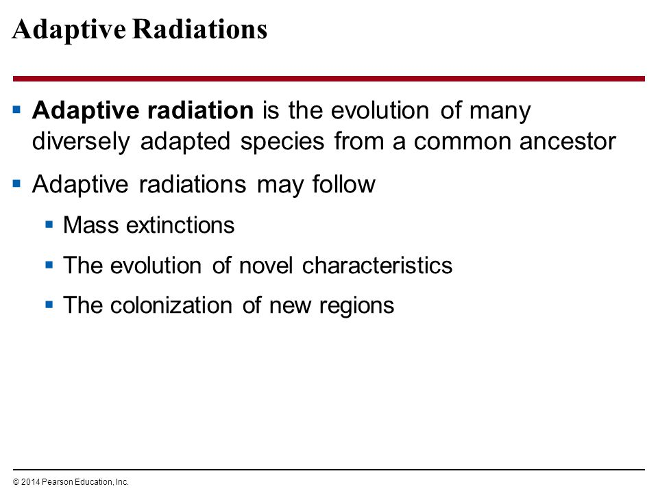 © 2014 Pearson Education, Inc. Adaptive Radiations  Adaptive radiation is the evolution of many diversely adapted species from a common ancestor  Ad