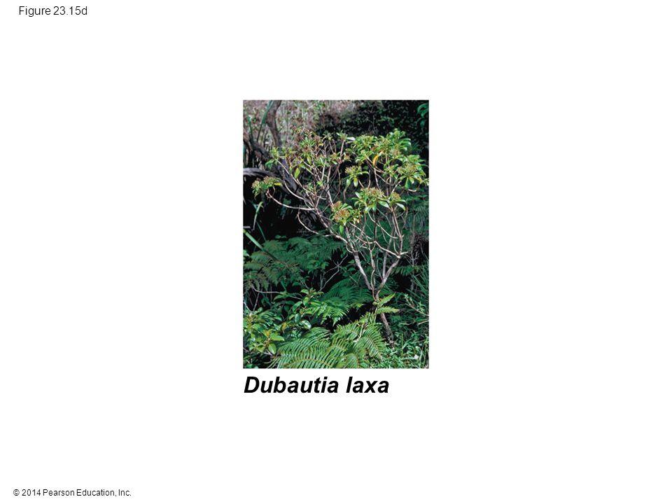 © 2014 Pearson Education, Inc. Figure 23.15d Dubautia laxa