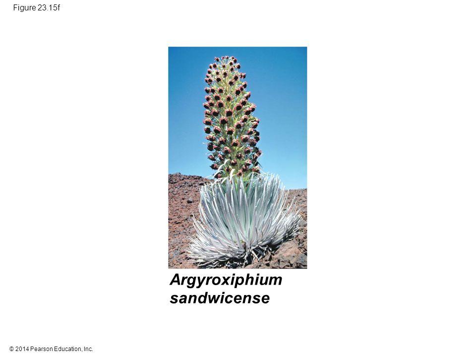 © 2014 Pearson Education, Inc. Figure 23.15f Argyroxiphium sandwicense