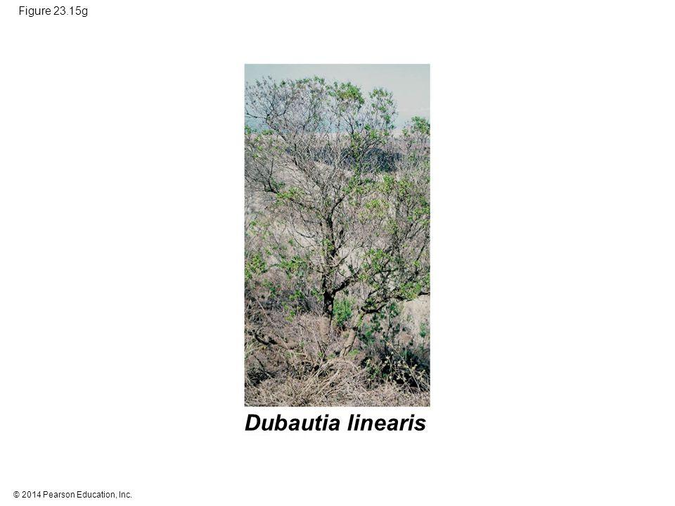 © 2014 Pearson Education, Inc. Figure 23.15g Dubautia linearis