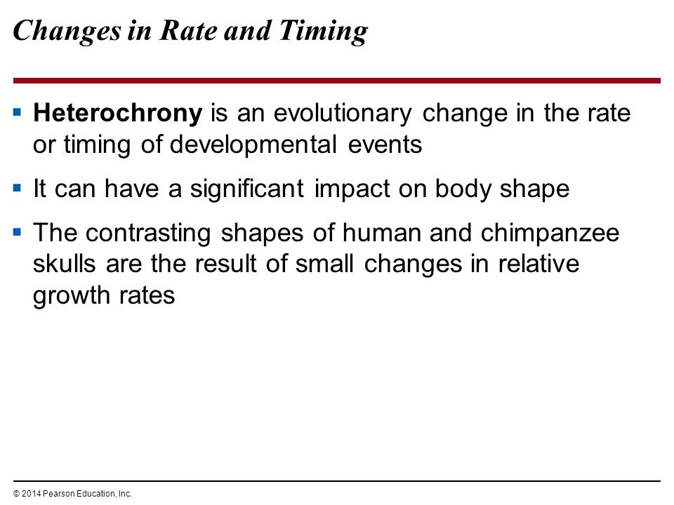© 2014 Pearson Education, Inc. Changes in Rate and Timing  Heterochrony is an evolutionary change in the rate or timing of developmental events  It