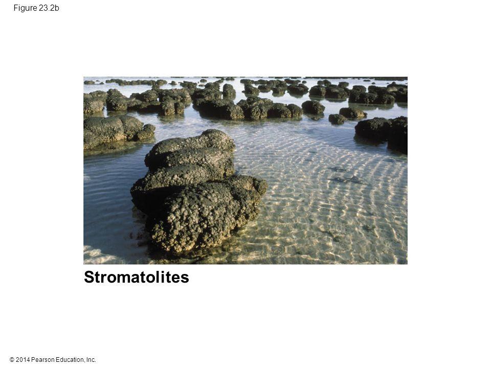 © 2014 Pearson Education, Inc. Figure 23.2b Stromatolites
