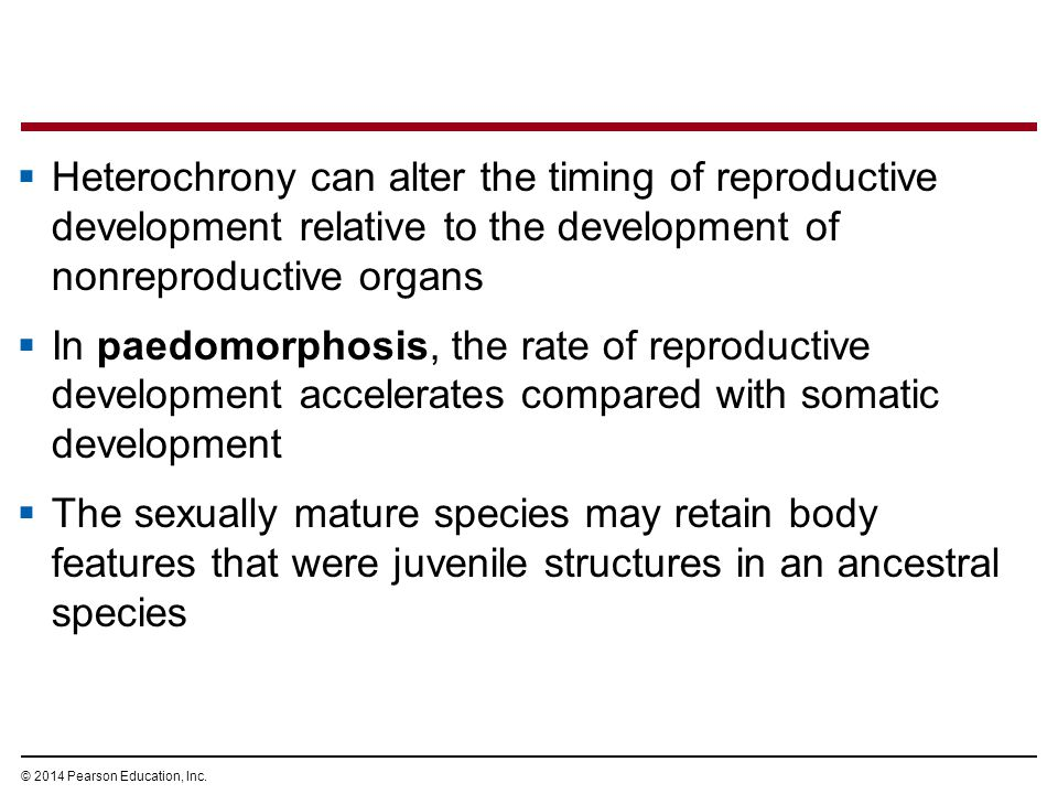 © 2014 Pearson Education, Inc.  Heterochrony can alter the timing of reproductive development relative to the development of nonreproductive organs 