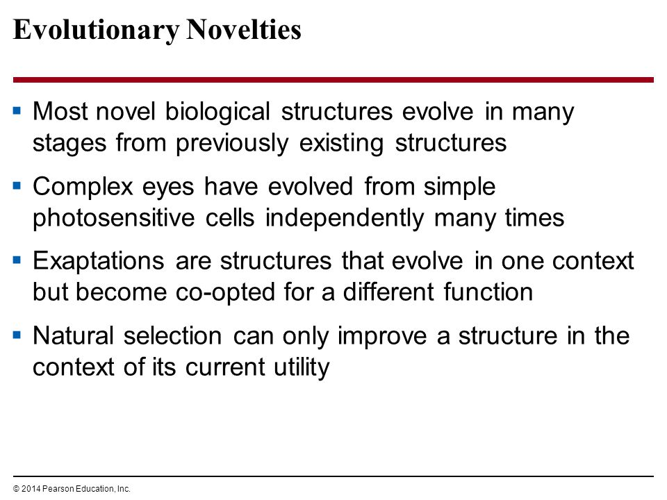 © 2014 Pearson Education, Inc. Evolutionary Novelties  Most novel biological structures evolve in many stages from previously existing structures  C