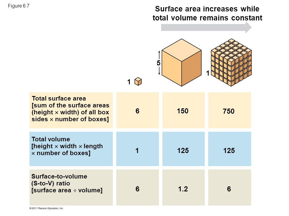 Surface area increases while total volume remains constant Total surface area [sum of the surface areas (height  width) of all box sides  number of