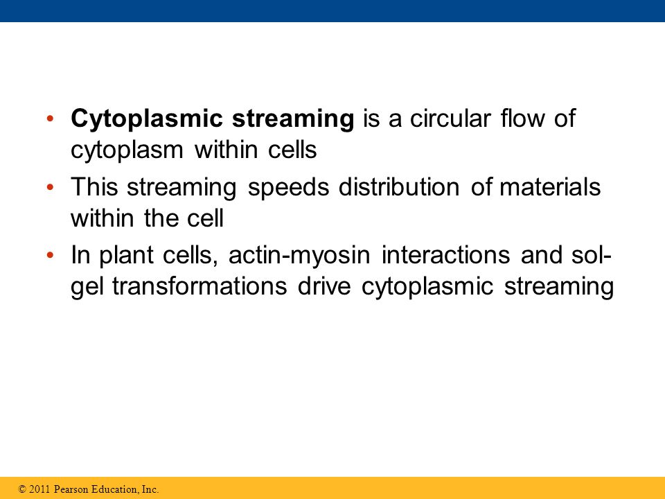 Cytoplasmic streaming is a circular flow of cytoplasm within cells This streaming speeds distribution of materials within the cell In plant cells, act