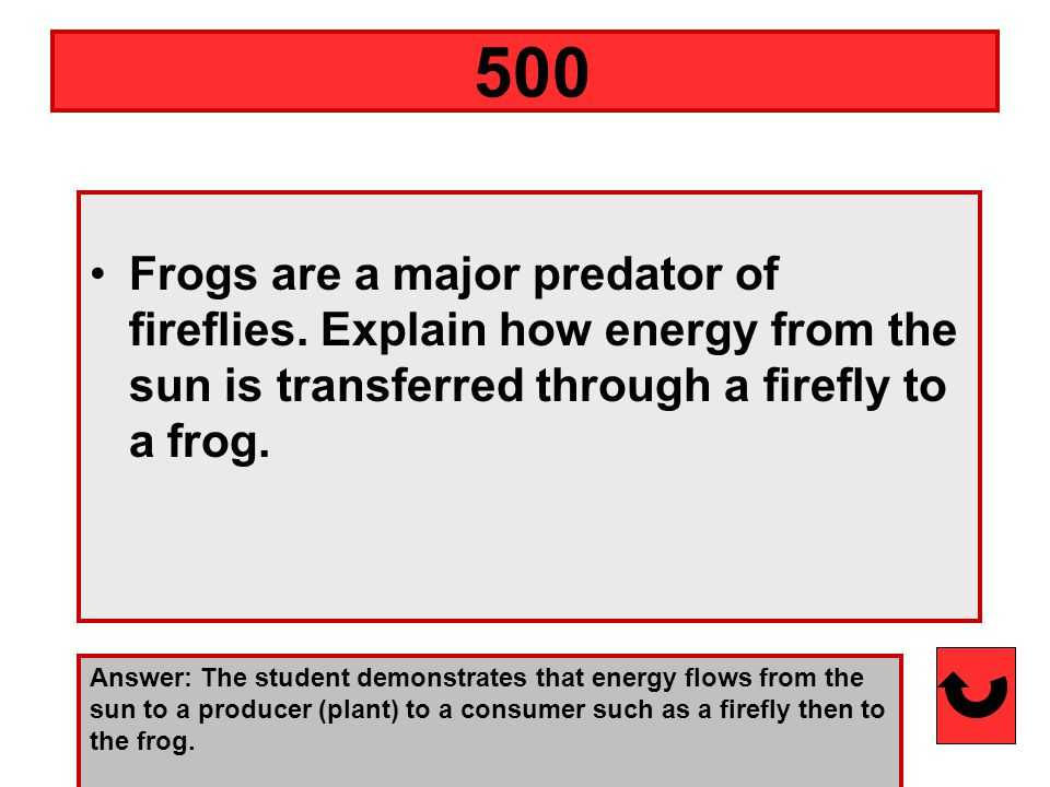Frogs are a major predator of fireflies.