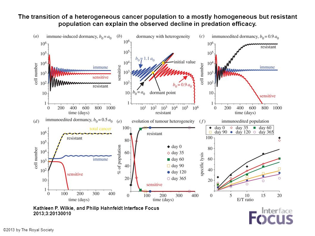 The transition of a heterogeneous cancer population to a mostly homogeneous but resistant population can explain the observed decline in predation eff