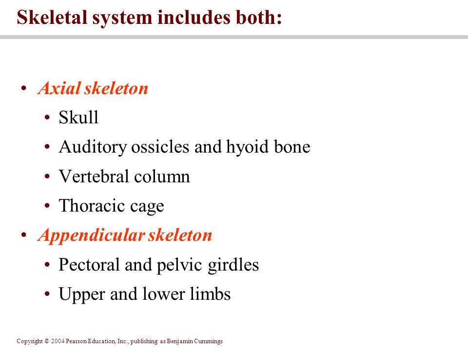 Copyright © 2004 Pearson Education, Inc., publishing as Benjamin Cummings Axial skeleton Skull Auditory ossicles and hyoid bone Vertebral column Thora