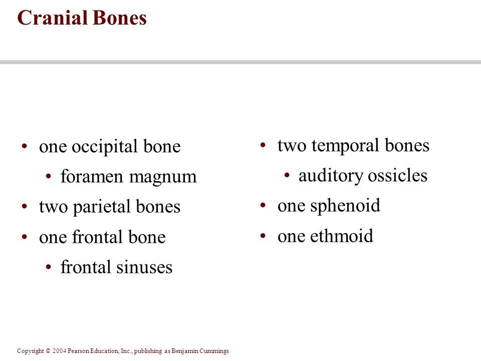 Copyright © 2004 Pearson Education, Inc., publishing as Benjamin Cummings one occipital bone foramen magnum two parietal bones one frontal bone fronta