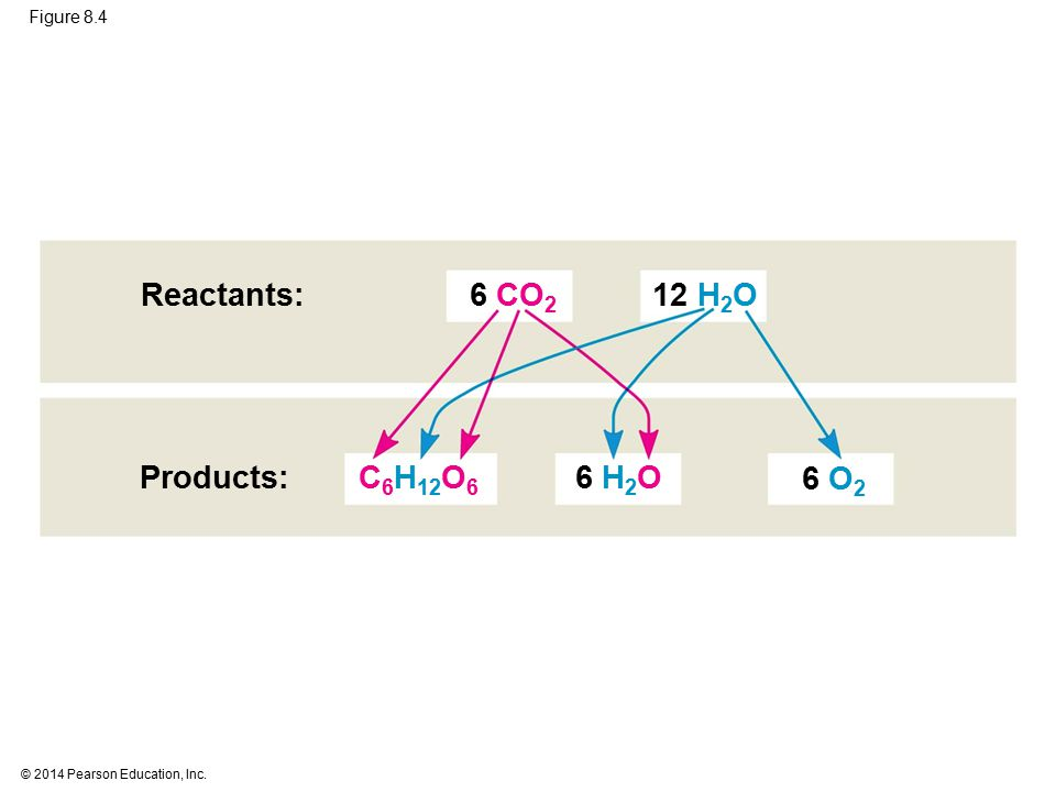 Figure 8.4 Products: Reactants: 6 CO 2 6 O 2 C 6 H 12 O 6 6 H 2 O 12 H 2 O