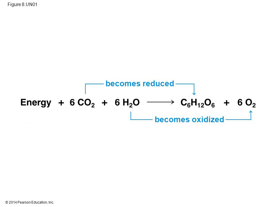 Figure 8.UN01 becomes reduced becomes oxidized