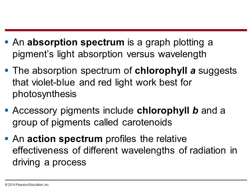  An absorption spectrum is a graph plotting a pigment's light absorption versus wavelength  The absorption spectrum of chlorophyll a suggests that v