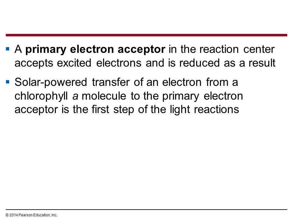  A primary electron acceptor in the reaction center accepts excited electrons and is reduced as a result  Solar-powered transfer of an electron from