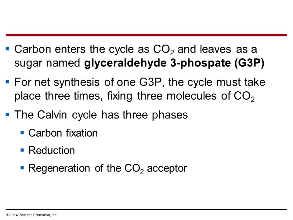  Carbon enters the cycle as CO 2 and leaves as a sugar named glyceraldehyde 3-phospate (G3P)  For net synthesis of one G3P, the cycle must take plac