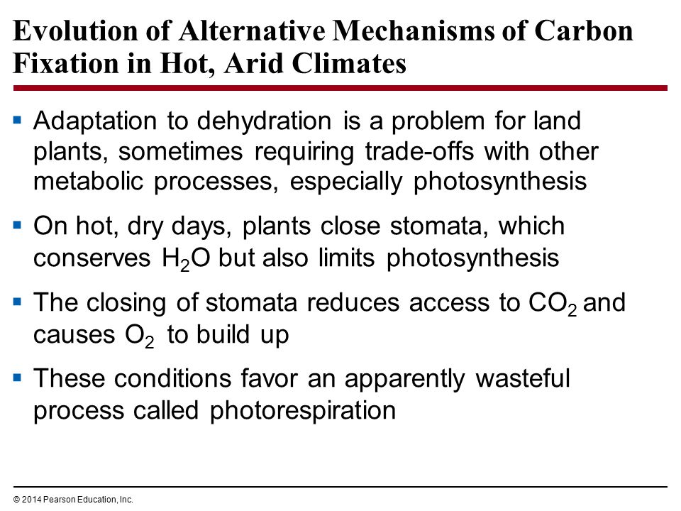 Evolution of Alternative Mechanisms of Carbon Fixation in Hot, Arid Climates  Adaptation to dehydration is a problem for land plants, sometimes requi