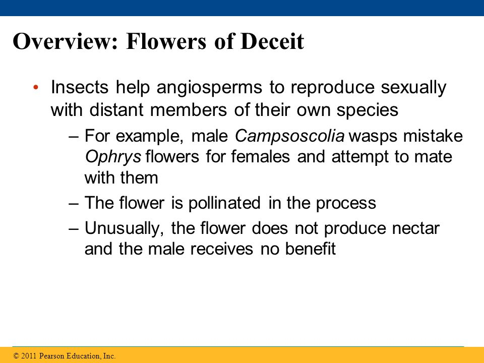 Pollination In angiosperms, pollination is the transfer of pollen from an anther to a stigma Pollination can be by wind, water, or animals Wind-pollinated species (e.g., grasses and many trees) release large amounts of pollen © 2011 Pearson Education, Inc.