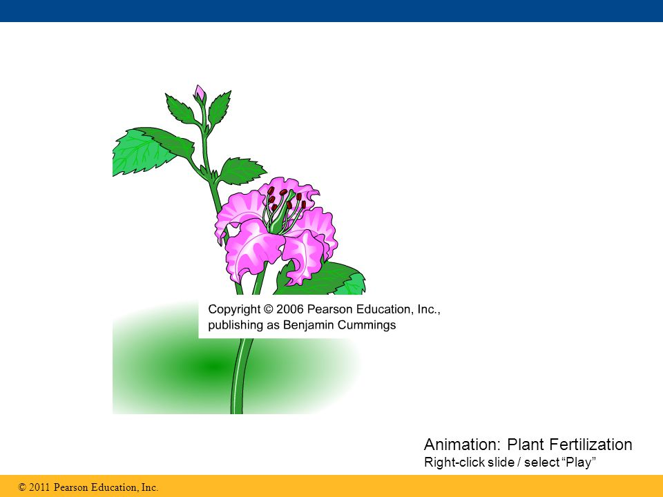 "Animation: Plant Fertilization Right-click slide / select ""Play"""