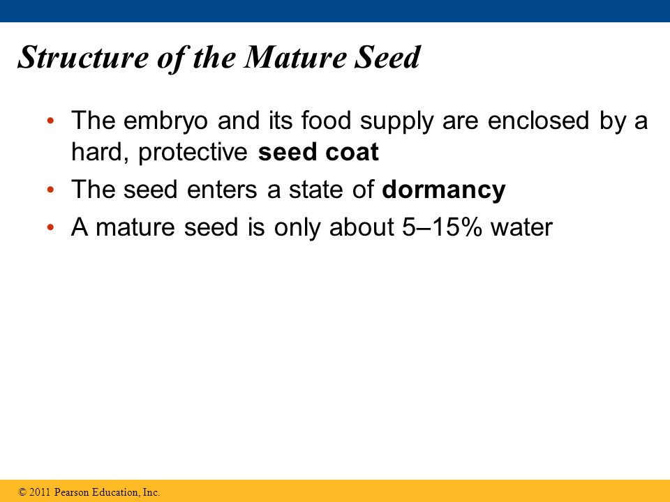 Structure of the Mature Seed The embryo and its food supply are enclosed by a hard, protective seed coat The seed enters a state of dormancy A mature