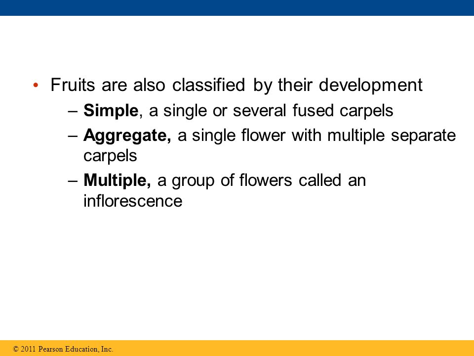 Fruits are also classified by their development –Simple, a single or several fused carpels –Aggregate, a single flower with multiple separate carpels