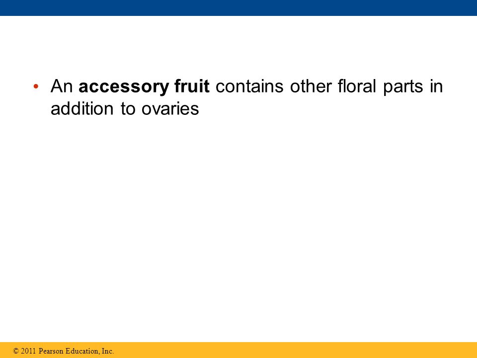 An accessory fruit contains other floral parts in addition to ovaries © 2011 Pearson Education, Inc.