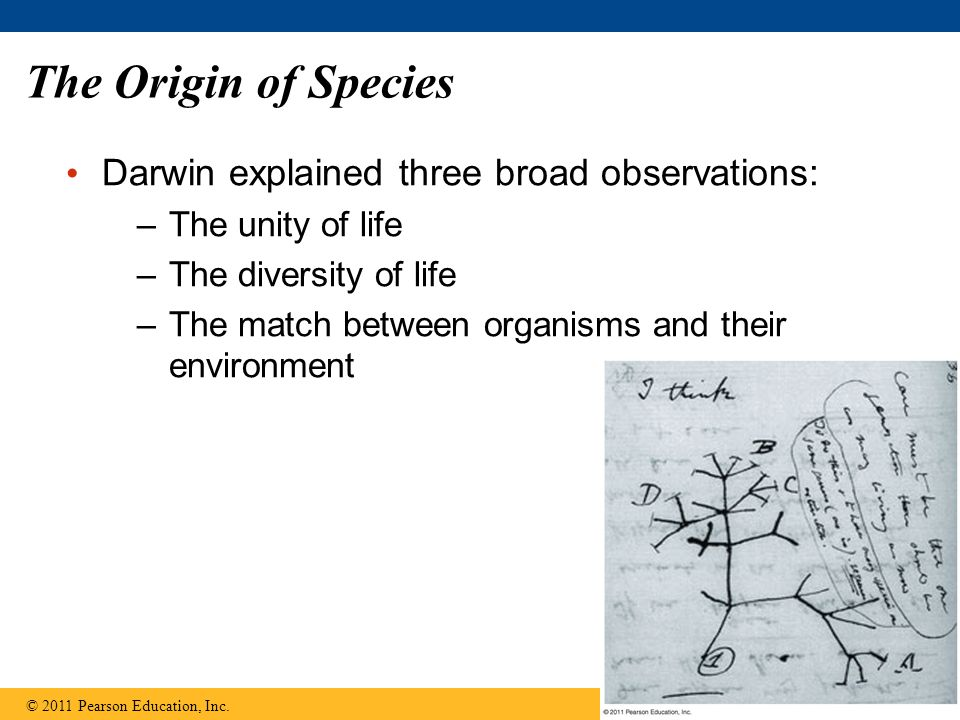 The Origin of Species Darwin explained three broad observations: –The unity of life –The diversity of life –The match between organisms and their envi