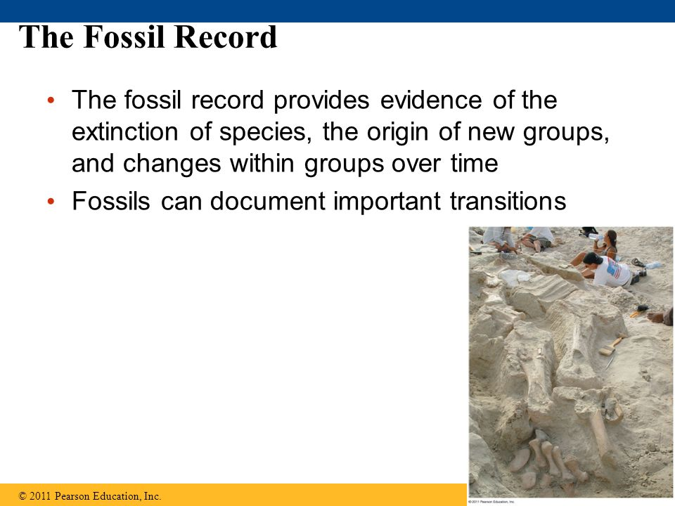 The Fossil Record The fossil record provides evidence of the extinction of species, the origin of new groups, and changes within groups over time Foss