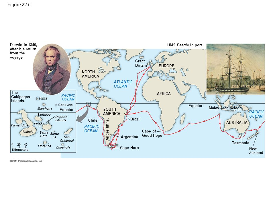Figure 22.5 Darwin in 1840, after his return from the voyage The Galápagos Islands NORTH AMERICA ATLANTIC OCEAN PACIFIC OCEAN PACIFIC OCEAN Pinta Marc