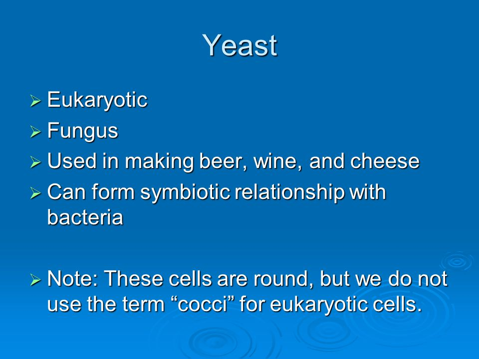 Yeast  Eukaryotic  Fungus  Used in making beer, wine, and cheese  Can form symbiotic relationship with bacteria  Note: These cells are round, but we do not use the term cocci for eukaryotic cells.