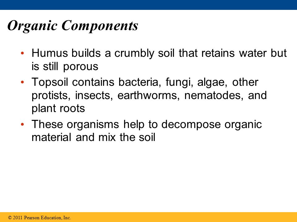 Organic Components Humus builds a crumbly soil that retains water but is still porous Topsoil contains bacteria, fungi, algae, other protists, insects